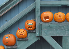 Calabazas talladas de Halloween en la exhibición Fotos de archivo