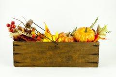 Calabazas y Autumn Leaves en una caja del queso Imagen de archivo libre de regalías