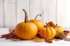Calabazas y calabazas coloridas para Halloween y la acción de gracias Fotos de archivo