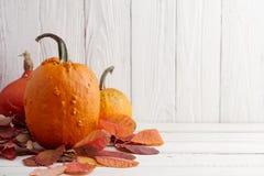 Calabazas y calabazas coloridas para Halloween y la acción de gracias Imagenes de archivo