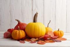 Calabazas y calabazas coloridas para Halloween y la acción de gracias Imagen de archivo libre de regalías