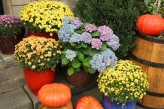 Calabazas y composición de las flores Fotos de archivo libres de regalías