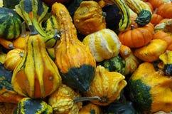 Calabazas y calabazas de otoño Imagen de archivo libre de regalías