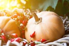 Calabazas y escaramujos salvajes rojos Fotos de archivo libres de regalías