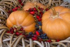 Calabazas y escaramujos salvajes rojos Fotografía de archivo libre de regalías