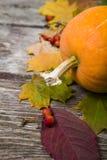 Calabazas y hojas de la caída Fotografía de archivo