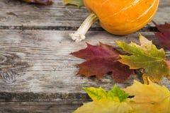 Calabazas y hojas de la caída Imagenes de archivo