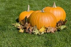 Calabazas y hojas de otoño grandes Fotos de archivo