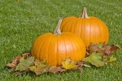 Calabazas y hojas de otoño grandes Foto de archivo libre de regalías