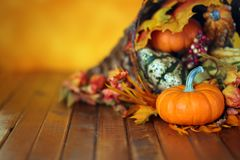 Calabazas, calabazas, y hojas en una cornucopia del otoño Fotografía de archivo libre de regalías