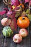 Calabazas y manzanas clasificadas con las hojas de otoño en la tabla de madera Fotos de archivo