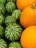 Calabazas y melones imagen de archivo libre de regalías