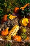 Calabazas y otra de la calabaza verduras de la caída Imagen de archivo libre de regalías