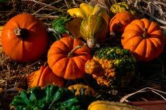 Calabazas y otra de la calabaza verduras de la caída Fotografía de archivo libre de regalías