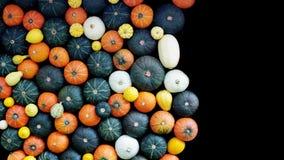 Calabazas y pared de la calabaza en el fondo negro, cosecha del otoño, Th Imagen de archivo libre de regalías