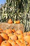 Calabazas y tallos del maíz Foto de archivo libre de regalías