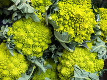 Calabrese green broccoli cabbage Stock Photo
