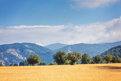 Calabrian fields Stock Photography