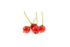 Berry of Calabura Royalty Free Stock Image