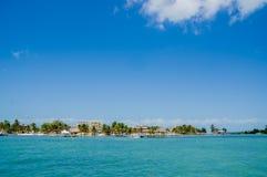 Calafate Belice el Caribe de Caye fotografía de archivo