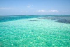 Calafato di Caye, Belize Fotografie Stock