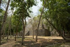 Calakmul archeological site Mexico. Temple surrounded by trees at the Calakmul archeological site in Mexico royalty free stock image