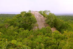 Calakmul I. Lonely pyramid rounded by the rain forest, as part of the mayan archaeological site of calakmul, in campeche, mexico royalty free stock photos