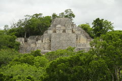 Calakmul II Royalty Free Stock Photography