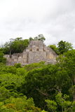 Calakmul III. Main pyramid of the mayan archaeological site of calakmul located in campeche, mexico stock photography