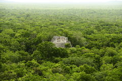 Calakmul IV. Lonely pyramid rounded by the rain forest, as part of the mayan archaeological site of calakmul, in campeche, mexico Stock Images