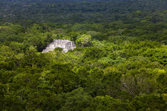 Calakmul Stock Photo