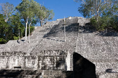 Calakmul - oude mayan stad in Mexico Stock Foto's