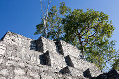 Calakmul - oude mayan stad in Mexico Stock Afbeelding