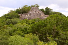 Calakmul X. Pyramid rounded by the rain forest, as part of the mayan archaeological site of calakmul, in campeche, mexico royalty free stock photo