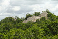 Calakmul V. Main pyramid of the mayan archaeological site of calakmul located in campeche, mexico stock photo