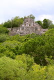 Calakmul VII. Lonely pyramid rounded by the rain forest, as part of the mayan archaeological site of calakmul, in campeche, mexico royalty free stock image