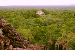 Calakmul VIII. Pyramid rounded by the rain forest, as part of the mayan archaeological site of calakmul, in campeche, mexico stock photography