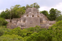 Calakmul XI. Pyramid rounded by the rain forest, as part of the mayan archaeological site of calakmul, in campeche, mexico stock images