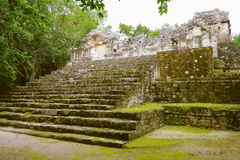 Calakmul XVIII. Pyramid rounded by the rain forest, as part of the mayan archaeological site of calakmul, in campeche, mexico royalty free stock photos