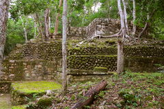 Calakmul XXI. Pyramid rounded by the rain forest, as part of the mayan archaeological site of calakmul, in campeche, mexico royalty free stock photos