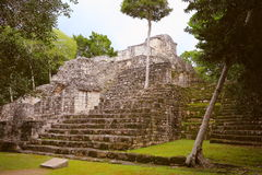 Calakmul XXII. Pyramid rounded by the rain forest, as part of the mayan archaeological site of calakmul, in campeche, mexico stock photos