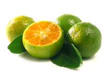 Calamansi7960 stock photo