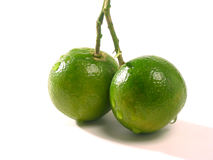 Calamansi7952 royalty free stock photos