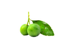 Calamansi Royalty Free Stock Photography