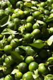 Calamansi Lemon Royalty Free Stock Images