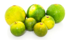 Calamansi and Lime II Stock Photos