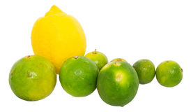 Calamansi, Lime and Lemon III Royalty Free Stock Photo