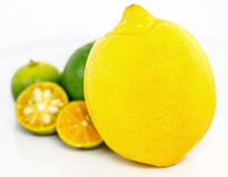 Calamansi, Lime and Lemon IV Royalty Free Stock Images