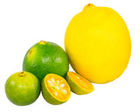 Calamansi, Lime and Lemon VII Royalty Free Stock Image