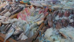 Calamar, caranguejo, lagosta e várias variedades de peixes vídeos de arquivo